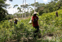 Coca cultivation has increased once again in Colombia