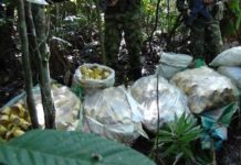 The Colombian army seized hundreds of landmines in the department of Chocó