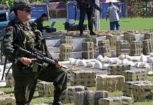 Despite a slight reduction in the total area of coca cultivation, cocaine production in Colombia continues to rise