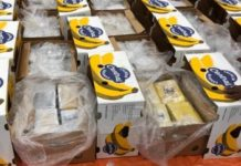 Cocaine found in a shipment of bananas from Costa Rica to the Rotterdam port in the Netherlands