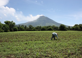 Can Armed Soldiers Really Solve El Salvador's Coffee Woes?