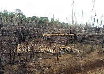 Politicians, Businesses in Deforestation Free-For-All in Guaviare, Colombia