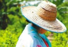 Coca growers have reported not feeling supported by the government as they seek alternative means of income