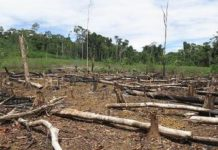 With park rangers leaving their posts, deforestation is likely to run rampant in Colombia's rainforest