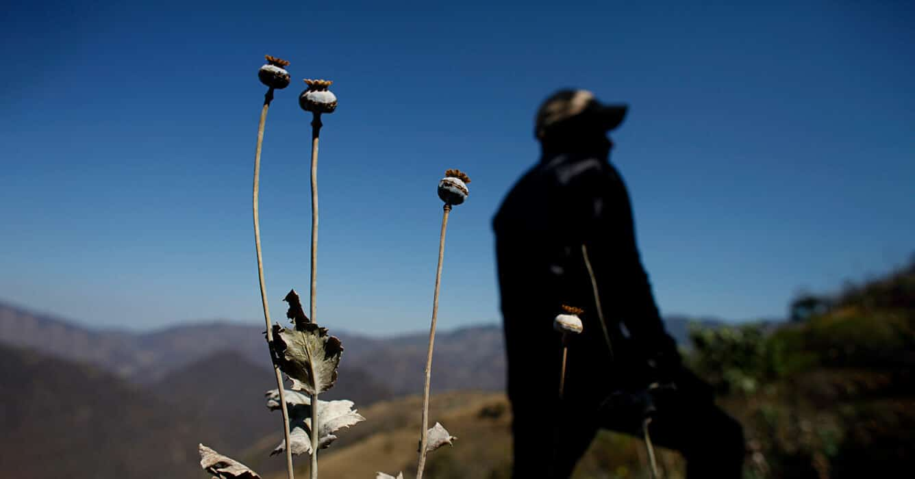Mexico-opium-poppies-drug-war-organized-crime-interview-31-july-2020-AP_536394640136.jpg